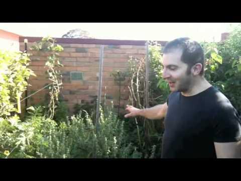 Melbourne Permaculture Garden Tour