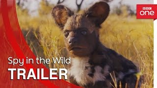 Spy in the Wild: Trailer - BBC One