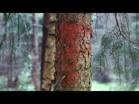 Canon PowerShot G5 X Bokeh Photo Samples