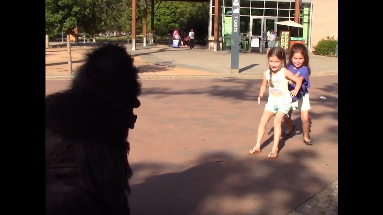 Escaped Gorilla Bathroom Prank gorilla escape prank - youtube