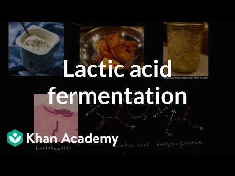 Lactic acid fermentation | Cellular respiration | Biology | Khan Academy