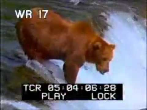 Bears catching and eating fish pt2 brown bears wild for What do wild fish eat