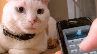 人猫語翻訳機アプリ オッドアイ君編 Human-to-Cat Translator