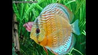 En Güzel 10 Tatlı Su Akvaryum Balığı