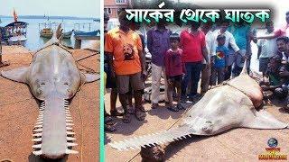 ভারতীয় জেলেদের জালে ধরা পরল 700 কিলো ওজনের মাছ   Top 8 Most Unique and Dangerous Fish