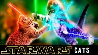Кошки и Звездные Войны | Игровые комплексы для кошек