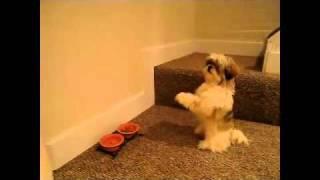 Spacy.Tv - Собака молится перед едой
