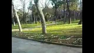 Morning in Gülhane Park