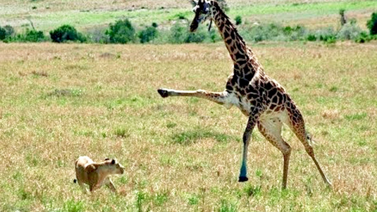 the Craziest Fights in The Animal Kingdom