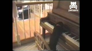 Dog Plays Piano and Sings Along