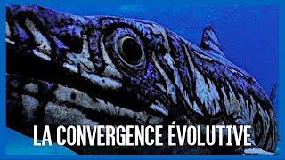 La convergence évolutive - IRL