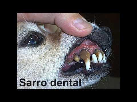 como quitar sarro de los dientes de un perro
