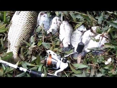 Tilapia And Carp Fishing Brisbane