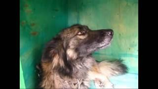 видео Сделать утепленную будку для собаки на зиму своими руками