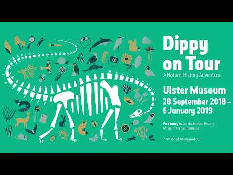 Dippy Ulster Museum Timelapse