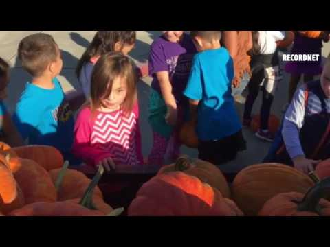 It's the Great Pumpkin! Hundreds of Lodi elementary school kids pick their own pumpkin.