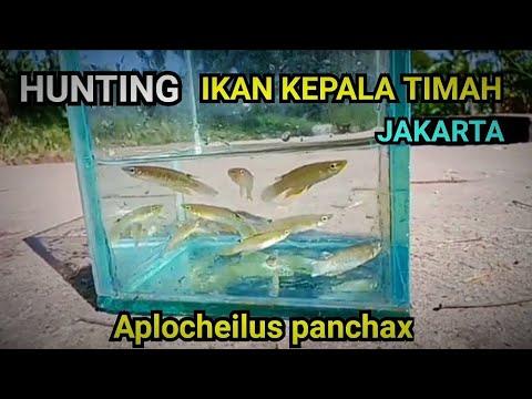 Ikan Unik Aquascape
