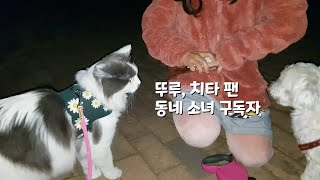 동네 소녀 구독자분과 만나는 고양이(반려견과 반려묘의 만남)