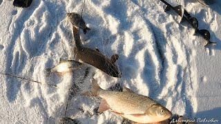 ЭТО ШОК ХАПУГИ ТРЕЩАТ РЫБА НЕ ЛЕЗЕТ В ЛУНКИ ЭТА РЫБАЛКА СДЕЛАЛА МОЙ ДЕНЬ Рыбалка на хапуги