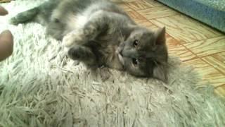 Кошка ненавидит спинер