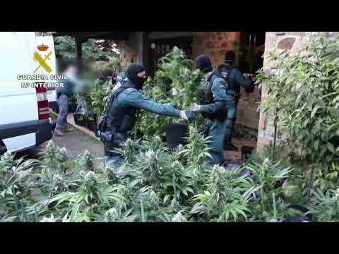 25 detenidos en una operación antidroga en Cantabria