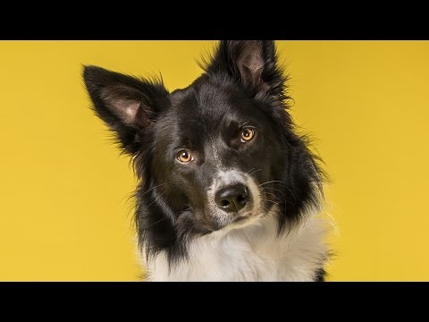 The Real Reason Dogs Tilt Their Heads And Other Canine Facts