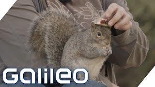 Eine Autistin und ihr Eichhörnchen: Das steckt hinter der Freundschaft | Galileo | ProSieben
