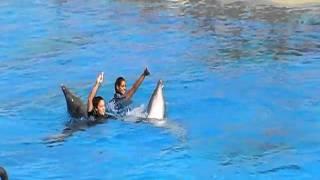 attiko parko delfinario