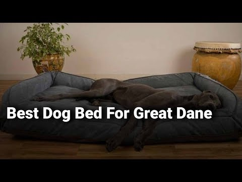 best-dog-bed-for-great-dane