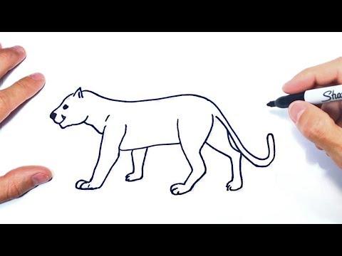 aplausos Perder la paciencia salud  dibujar un puma facil - 63% remise - www.muminlerotomotiv.com.tr