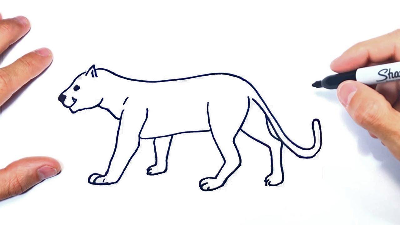 Como Dibujar Un Puma Paso A Paso Dibujo De Puma Youtube