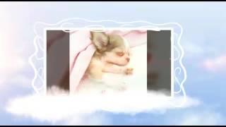 Алина Гросу-Собака