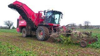 A British SUGAR BEET Harvest 🇬🇧