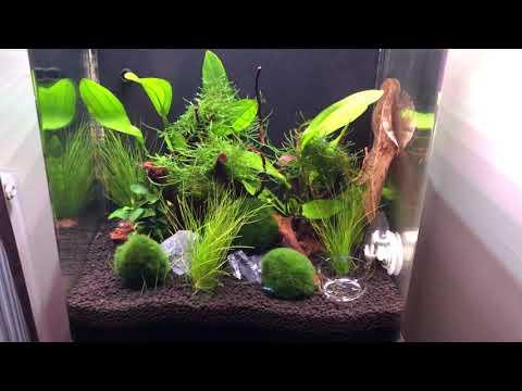 22 litre blue dream cherry shrimp planted tank