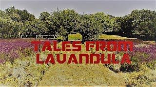 Tales from Lavandula: My Farm work in Victoria, Australia