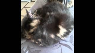 Кошки и фен