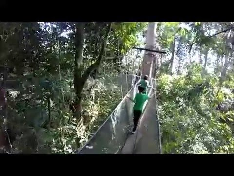 & Sabah canopy walk waterfall - YouTube