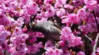 小金沢昇司、春はもうすぐ。