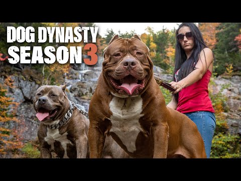 Dog Dynasty: Entire Season 3 (1 Hour 20 Min)