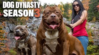 Dog Dynasty: Entire Season 3 (1 Hour 20 Min)