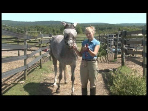 Horse Care & Riding : How to Lead a Horse Safely