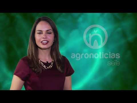 AGRONOTICIAS sie7e PROGRAMA 62