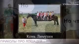 Приколы про лошадей!