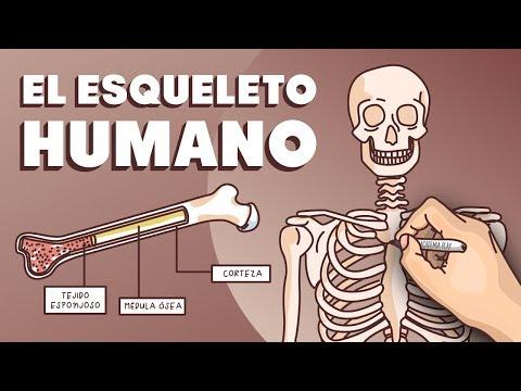 El Esqueleto Humano Youtube