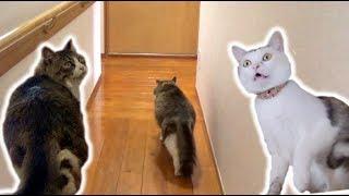 廊下を曲がるとゴッド姉ちゃん