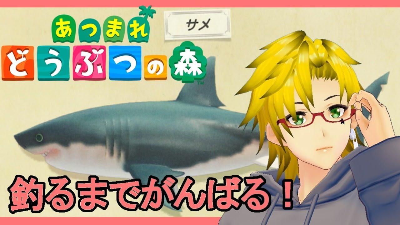 【あつもり】今度こそサメチャレンジ