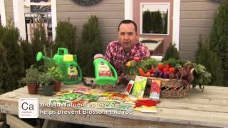 Frankie Flowers - Vegetable Gardening Tips
