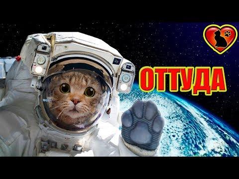 Вопрос: Кошка. Какие есть мифы, легенды, исторические факты?
