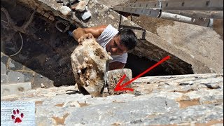 Rescue of a feral kitten trapped inside a stone wall