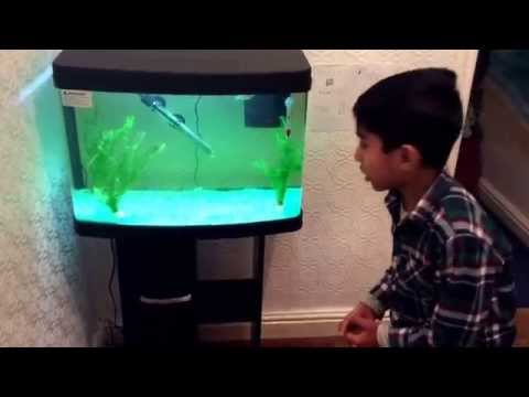 All about tropical fish at home for pets☺️❤️❤️